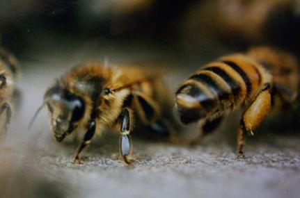 Une formation pour tous sur les abeilles