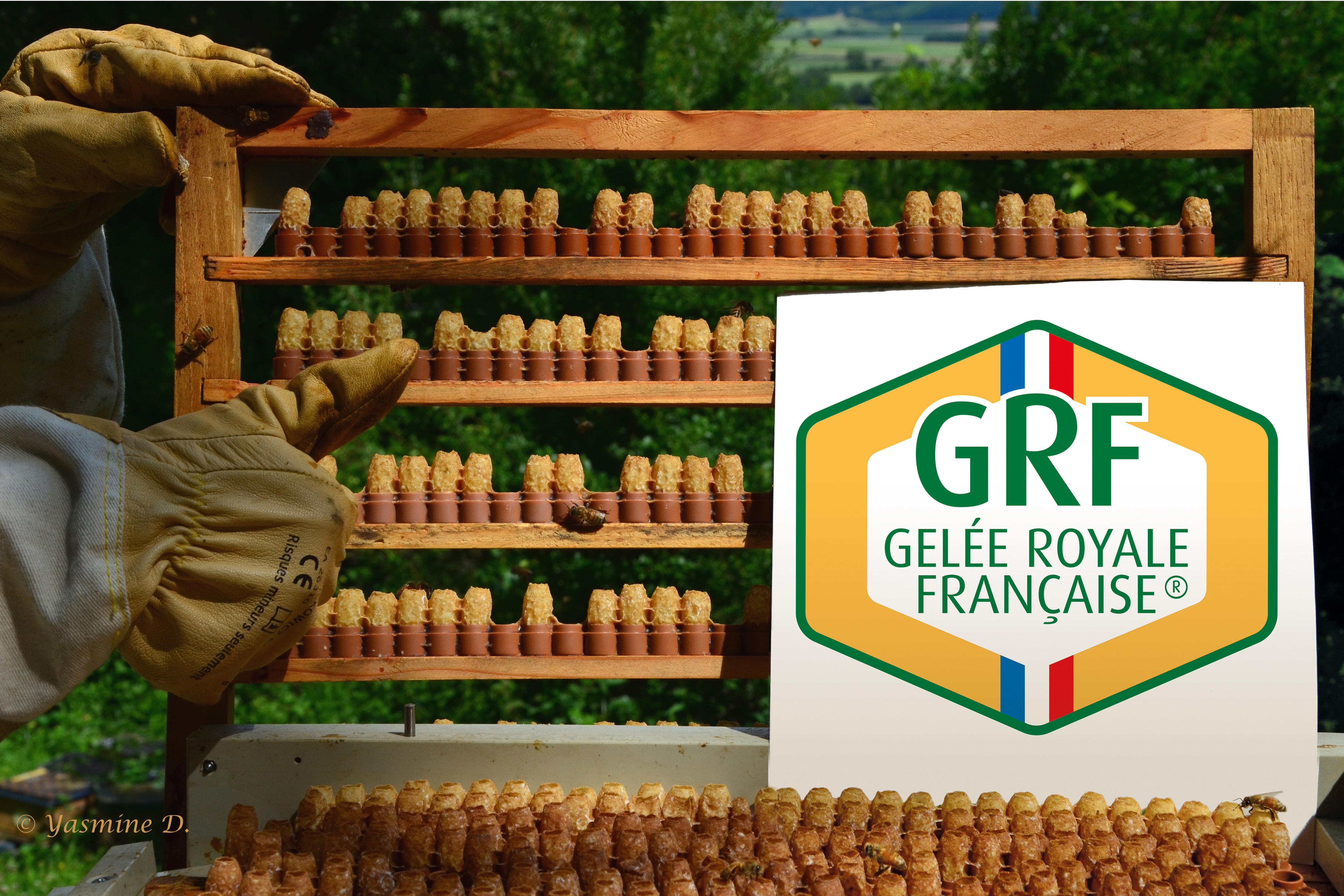 Entrez dans la démarche qualité GRF-Gelée Royale Française