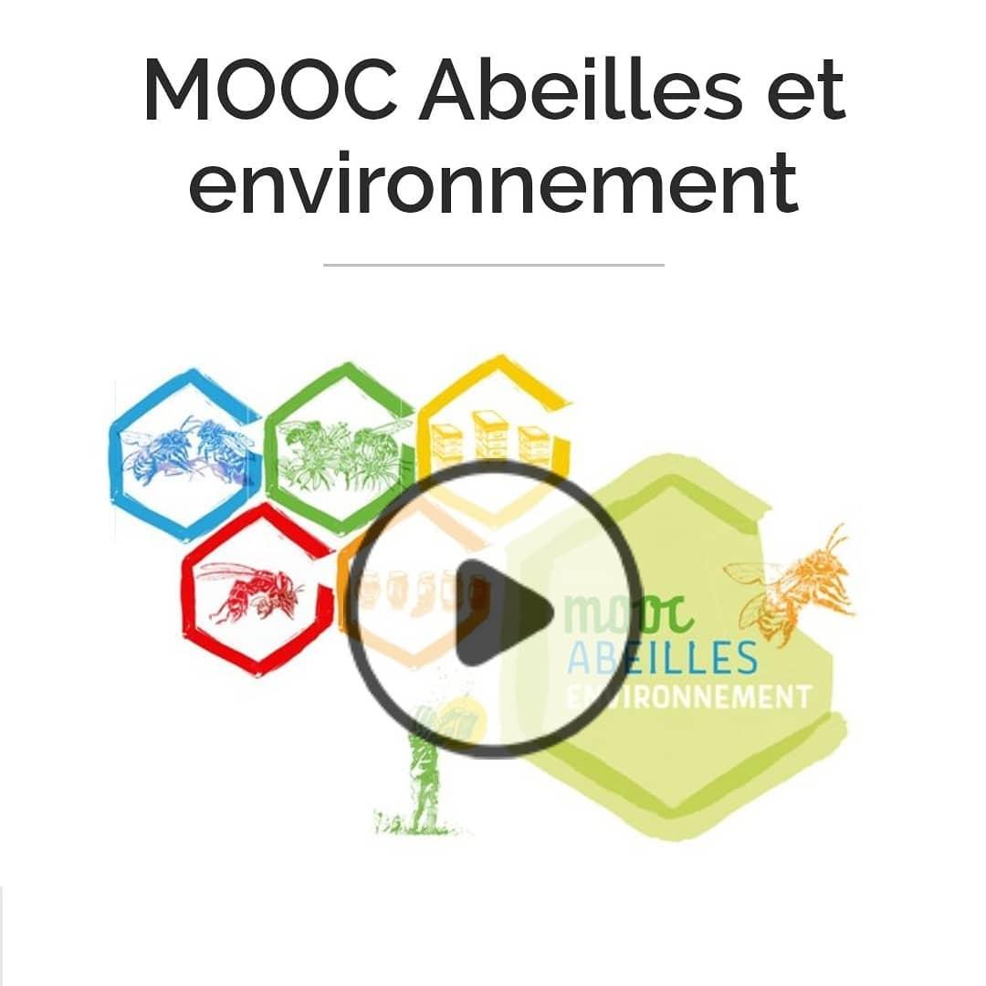 """Une formation gratuite et en ligne sur """"Abeilles et environnement"""""""